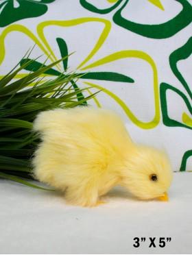 Chick, Chirp