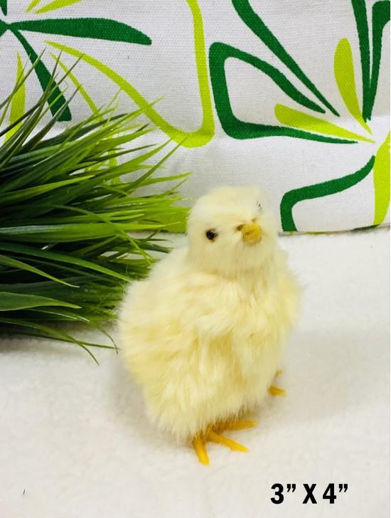 Chicken, Chirp