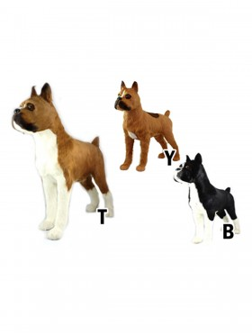 Boxer dog, Standing