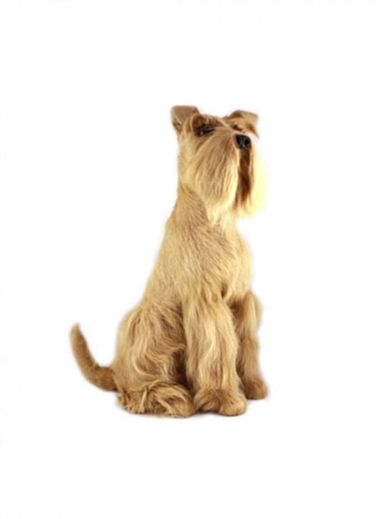 Standing Fox Terrier