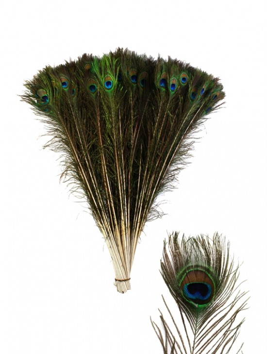 PEACOCK FEATHERS (100 PCS)
